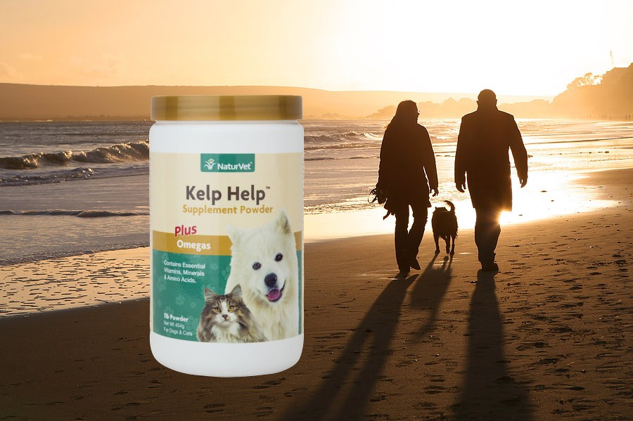 Kelp Help Powder