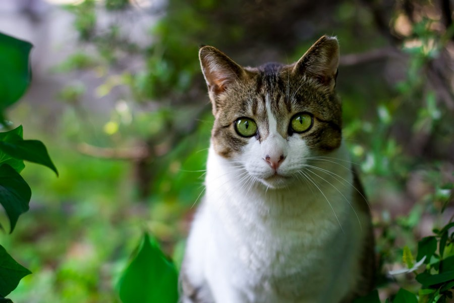 Safe Upper Limits for Cat Diets
