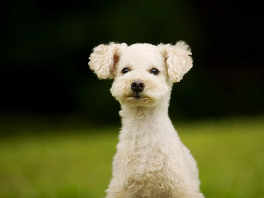 Safe Upper Limits for Dog Diets